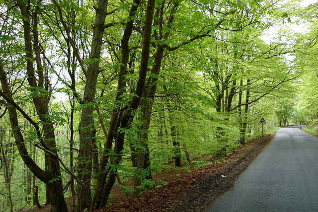 Wooded road near the Alyth Burn