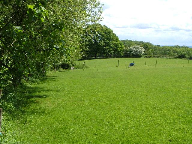 Field at Oakhurst Farm