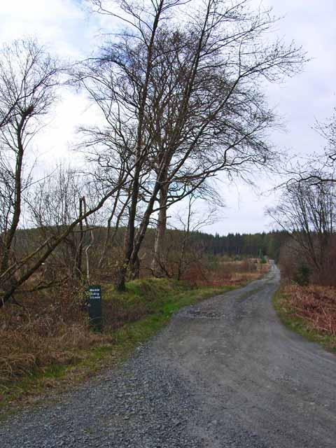 Forest road to Meikle Eldrig