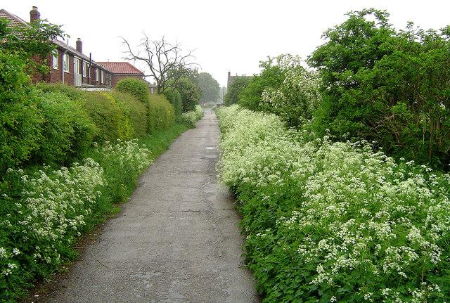 Edenthorpe Lanes