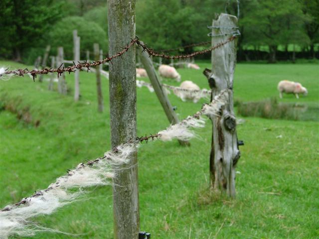 Fence, Side Farm