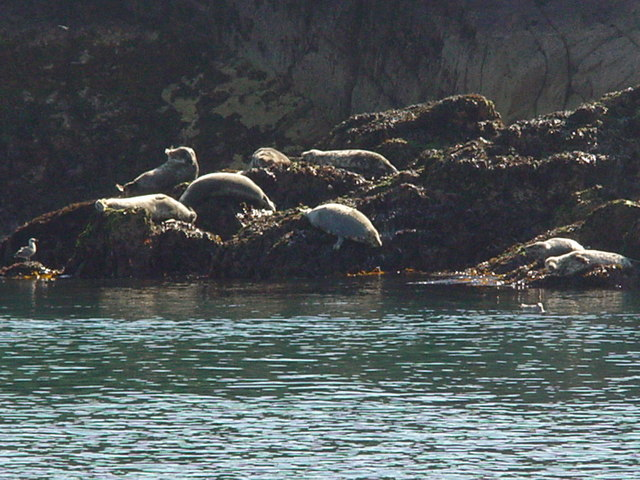 Seals by the Haven