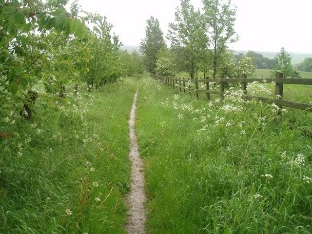 Bridleway, Upper Birchwood