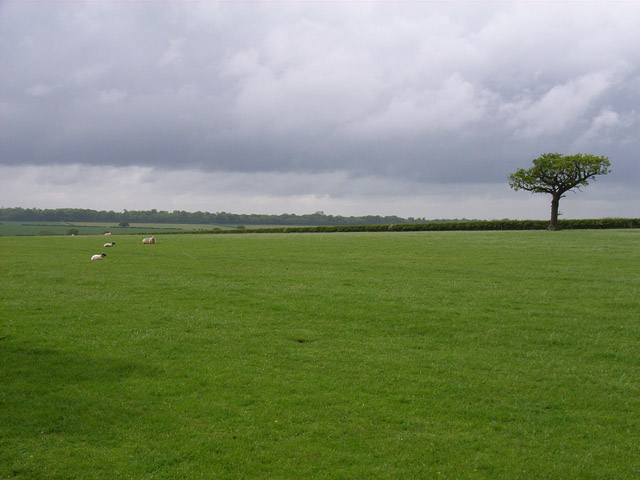 Pasture near Mapledurwell