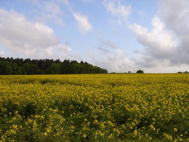 Farmland near Cufaude