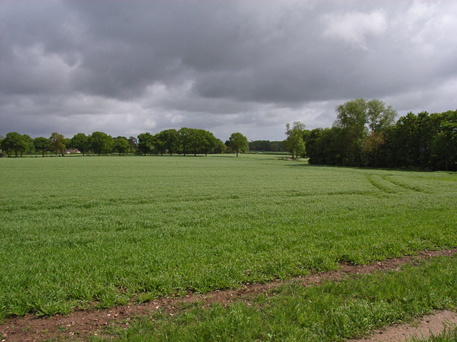 Farmland near Kingsclere