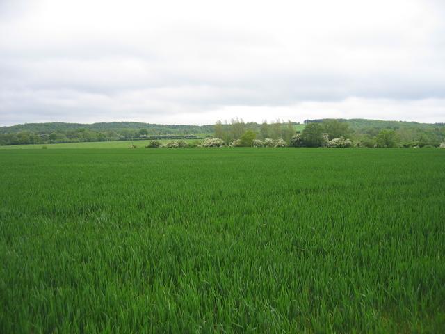View towards Shortwood