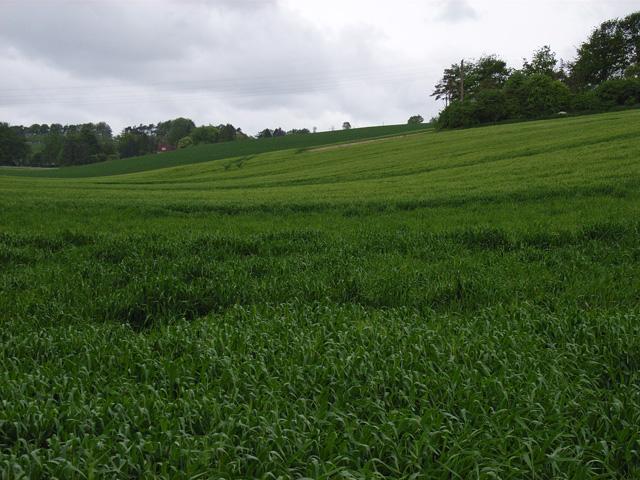 Farmland near Hannington