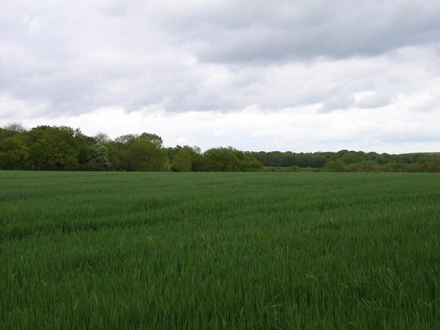 Farmland near Ashe Warren