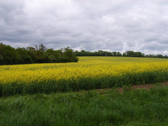 Farmland near Oakley