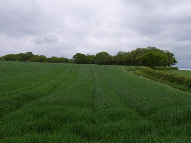 Farmland between Hannington and Ibworth