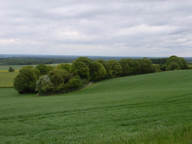 Copse and farmland below Woodgarston Farm
