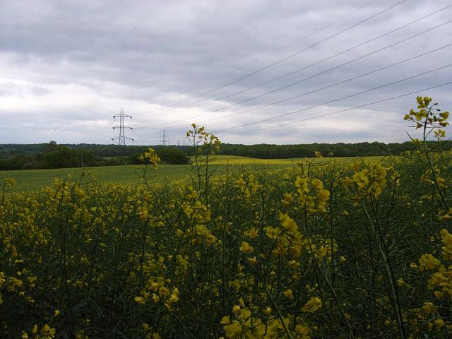 Farmland near Ewhurst Park