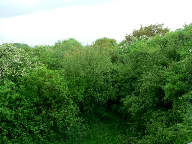 Overgrown Railway Line near Everthorpe
