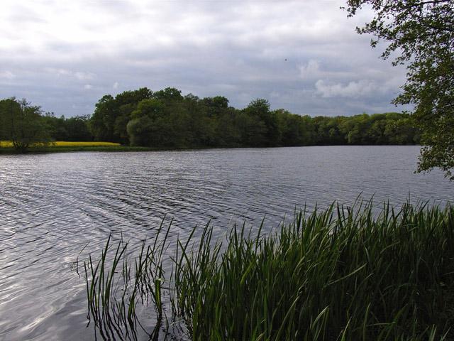 Ewhurst Pond