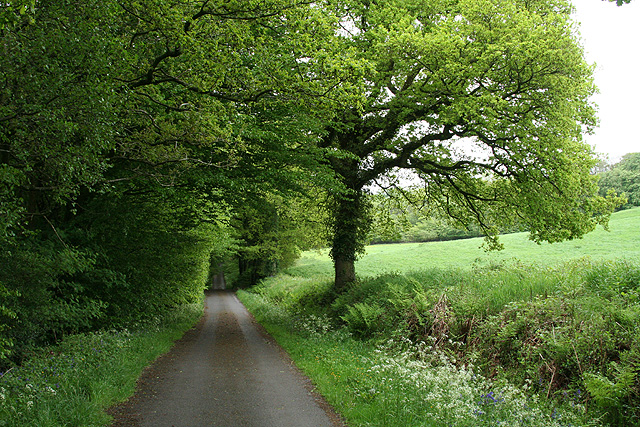 Churchstanton: lane to Biscombe