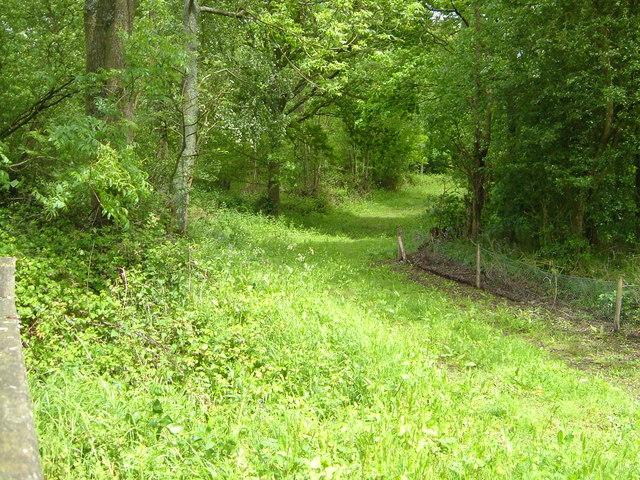South Seers Wood
