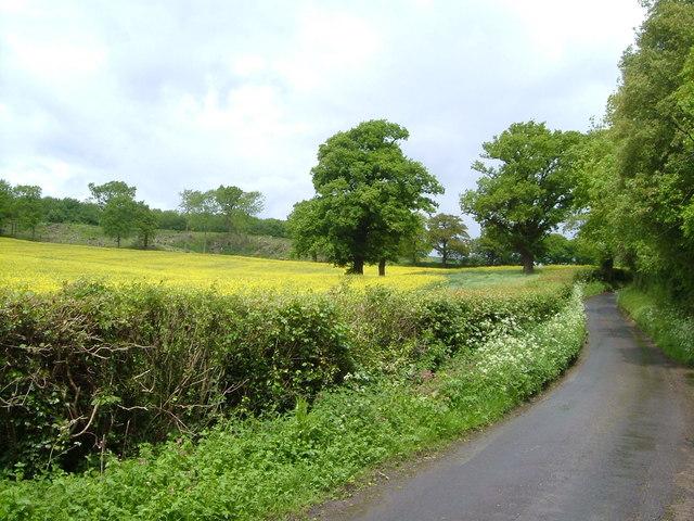 Mote Road