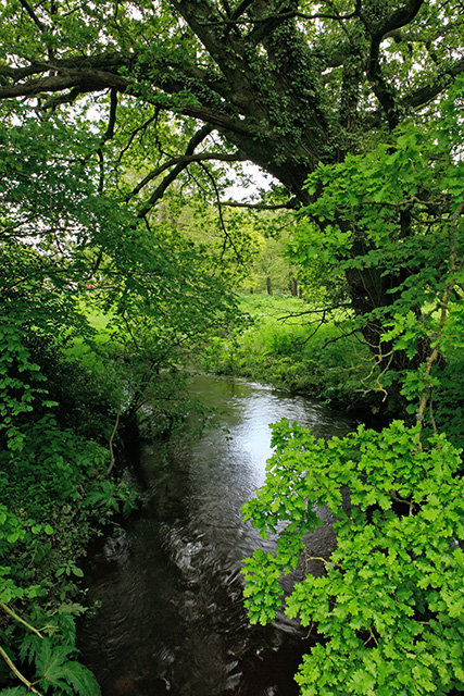Avon Water river at Flexford Lane