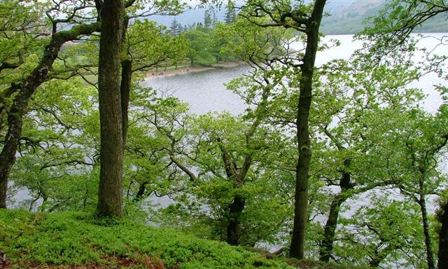 Hallinhag Wood, Ullswater