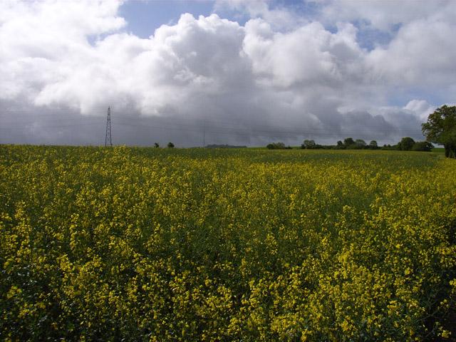 Farmland at Porch Farm