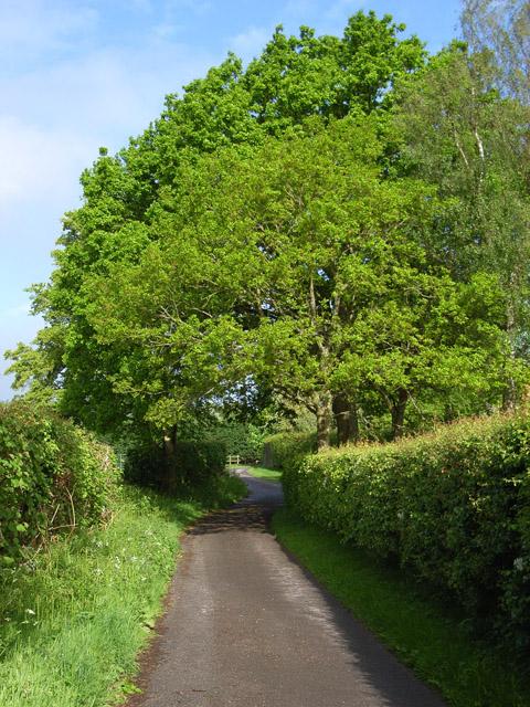Lane at Frith Common Farm