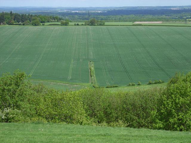 Farmland near Kingsclere