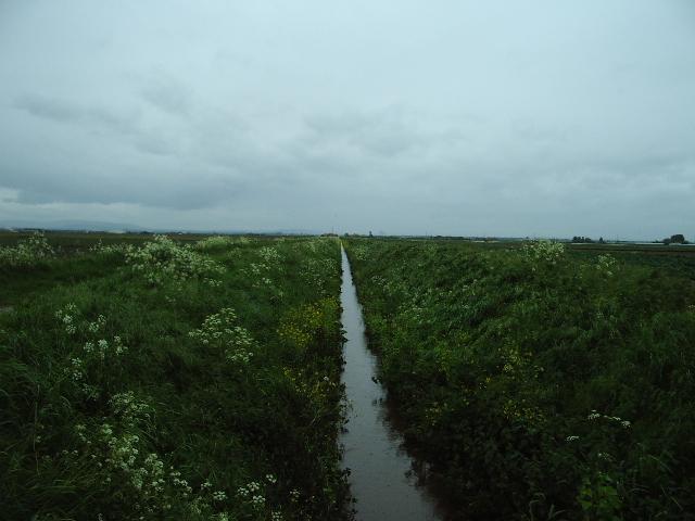 Carr Heys Watercourse