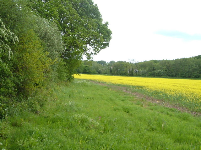 Field near Claygate