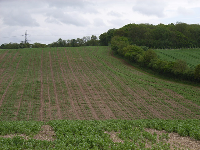 Farmland near Hannington