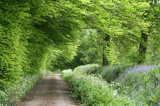 Churchstanton: Downlands Lane