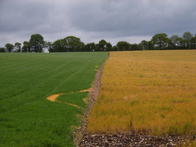 Farmland near Ibworth