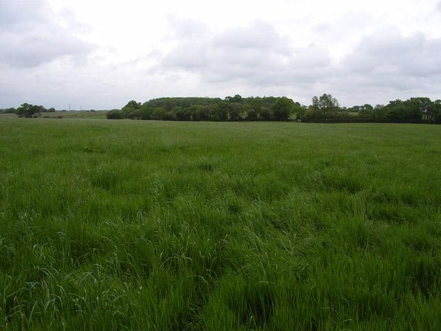 Field at Old Basing