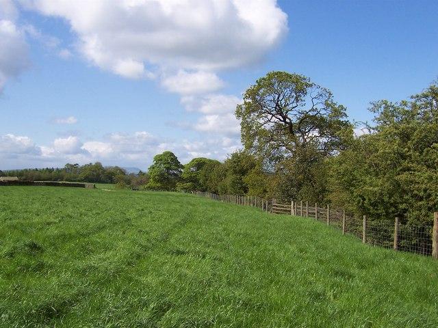 Field by Suntergill