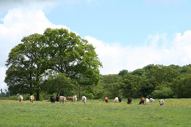 Broadhembury: near Pitney Farm