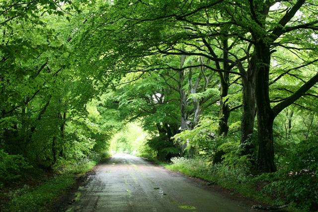 Broadhembury: Long Lane