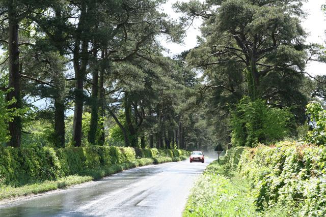 Dunkeswell: Limers Lane