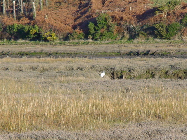 wetlands to the rear of the Gann Estuary