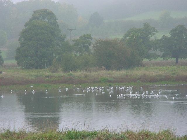 Wyver Lane Nature Reserve