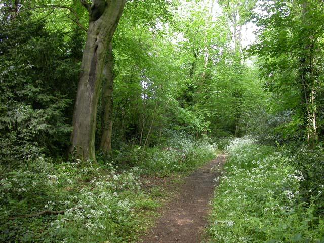 Footpath through Billing Lings