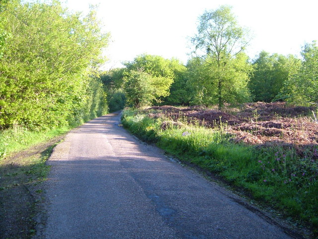 Lane on Gittisham Hill
