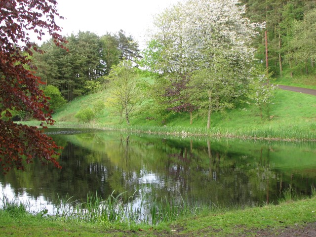 Pond at Ferniehaugh