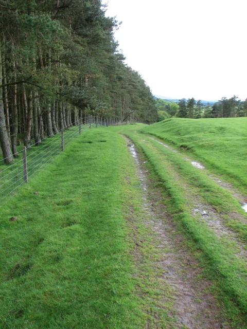 Track to Ferniehaugh