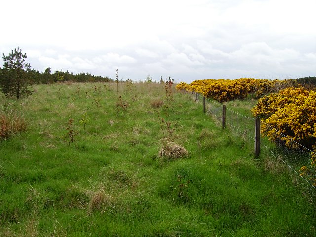 Blackerstone Moor