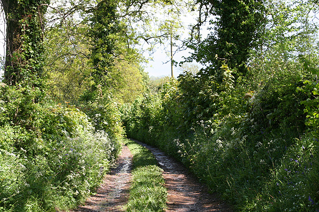 Clayhidon: track to Hole Farm