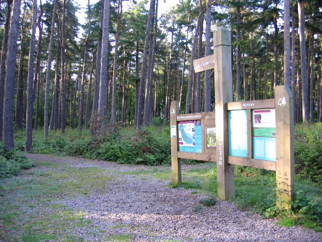 Rowney Warren pine woodland, Southill, Beds