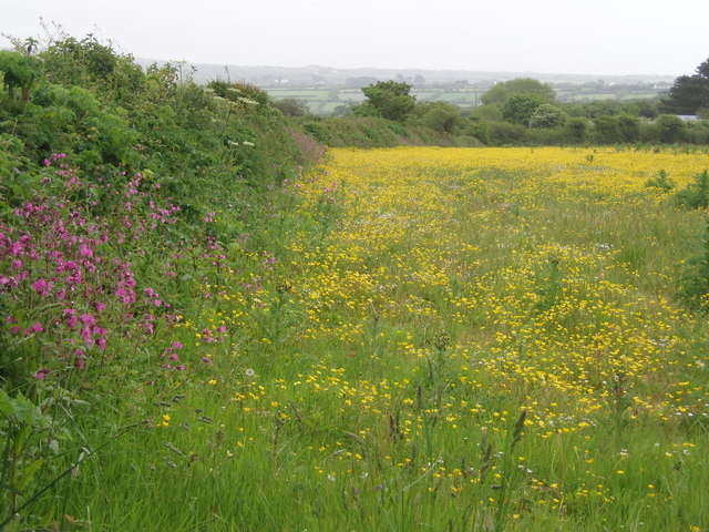 Buttercup Meadow, Packet Lane