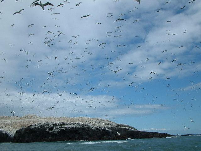 Grassholm Island