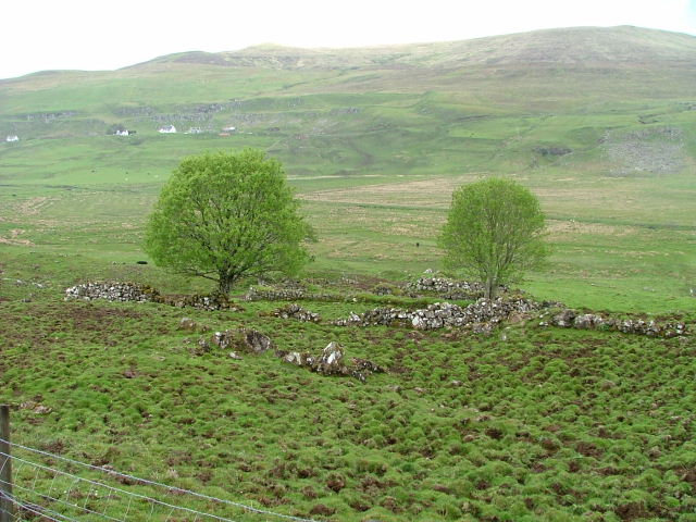 Drystane Enclosure and Trees