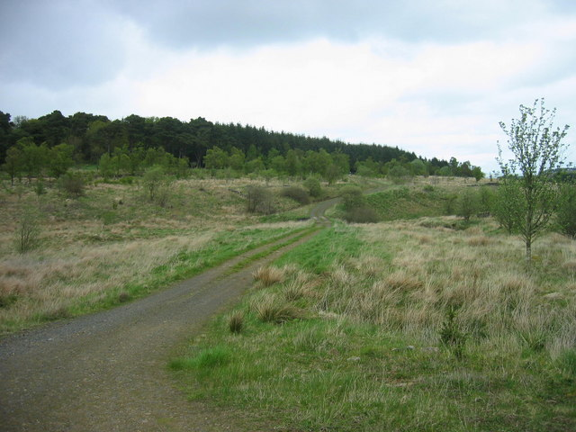 Forest track over Middle Burn, Wark Forest